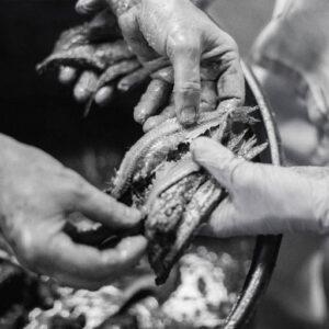 Anchoas, el sabor del mar